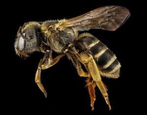 bee-black