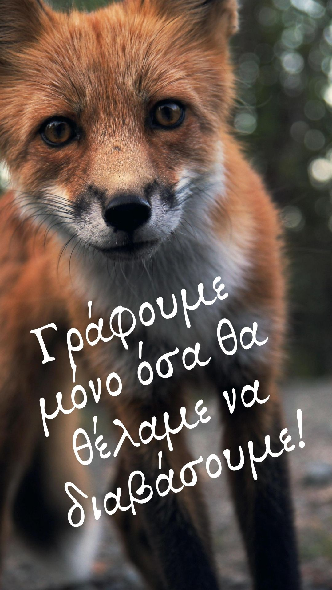 Banner-fox