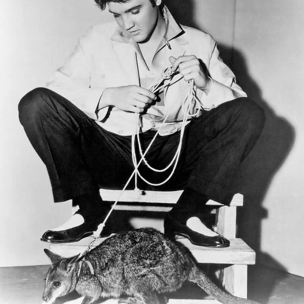 Elvis Presley with pet kangaroo