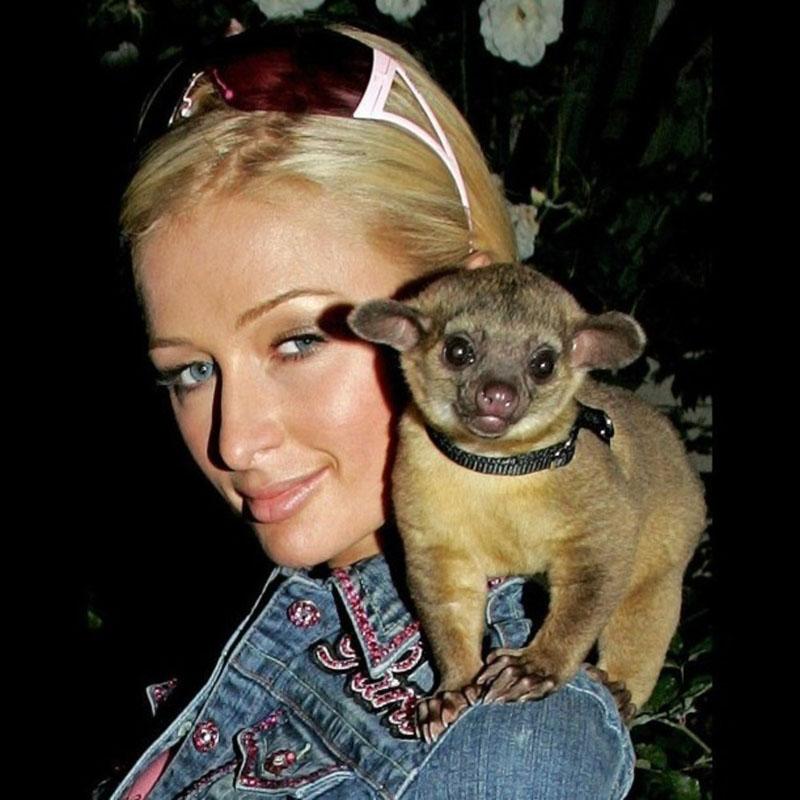 Paris Hilton and her Kinkajou