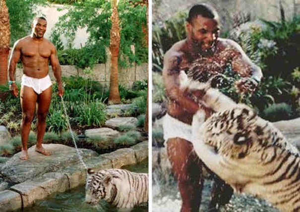 mike tyson and his tigers